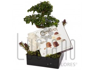 Bonsai com Chocolate Guylian
