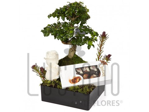 Bonsai com Chocolates